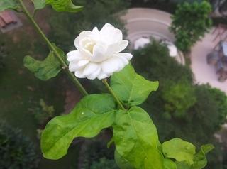 みごとに咲いた鉢植えの木の花