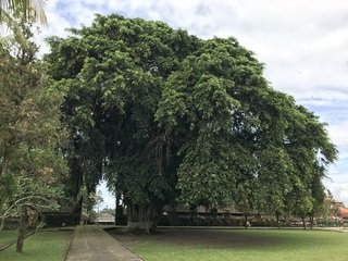 敷地内の巨木