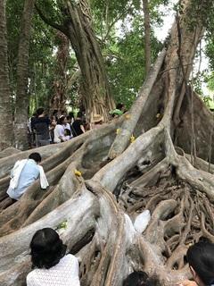 精霊が宿る樹