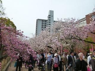 造幣局・桜の通り抜け
