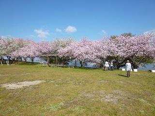 湖山池青島公園