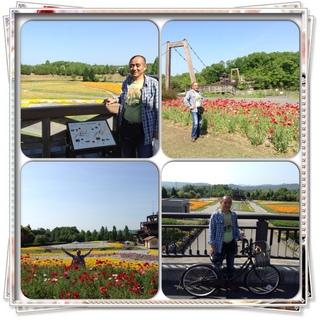 国営備北丘陵公園の花の広場