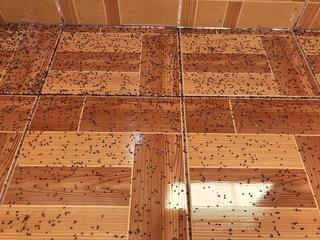 床に落ちた蟻