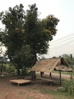 東屋とマンゴーの木