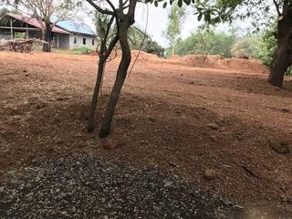 裏庭に広がる土