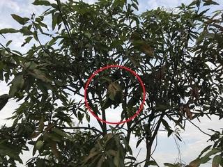 アカ蟻の巣