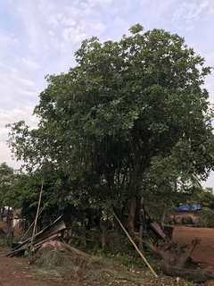裏庭の木々