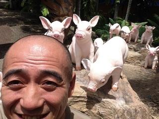 豚もいます