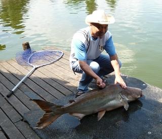 巨大淡水魚プラー・ブック